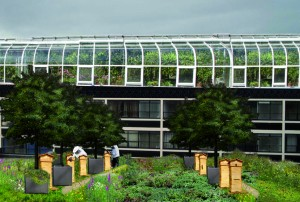 beehives on shopping centre roof